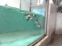Penguin_3